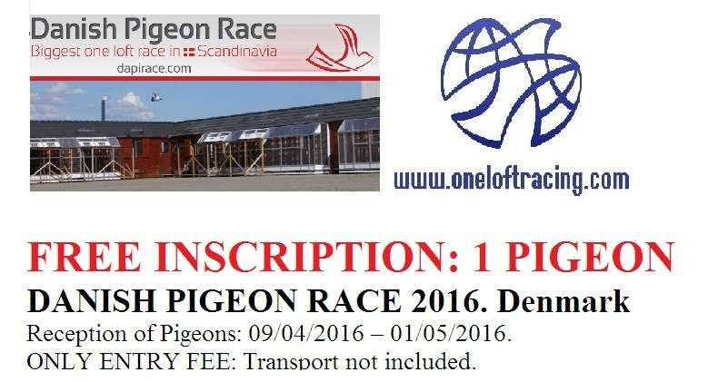 Danish Pigeon Race