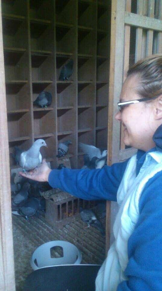 racing pigeons good hands