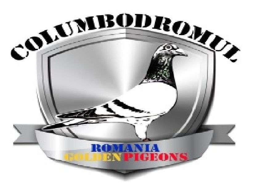 ROMANIAN GOLDEN PIGEON-9