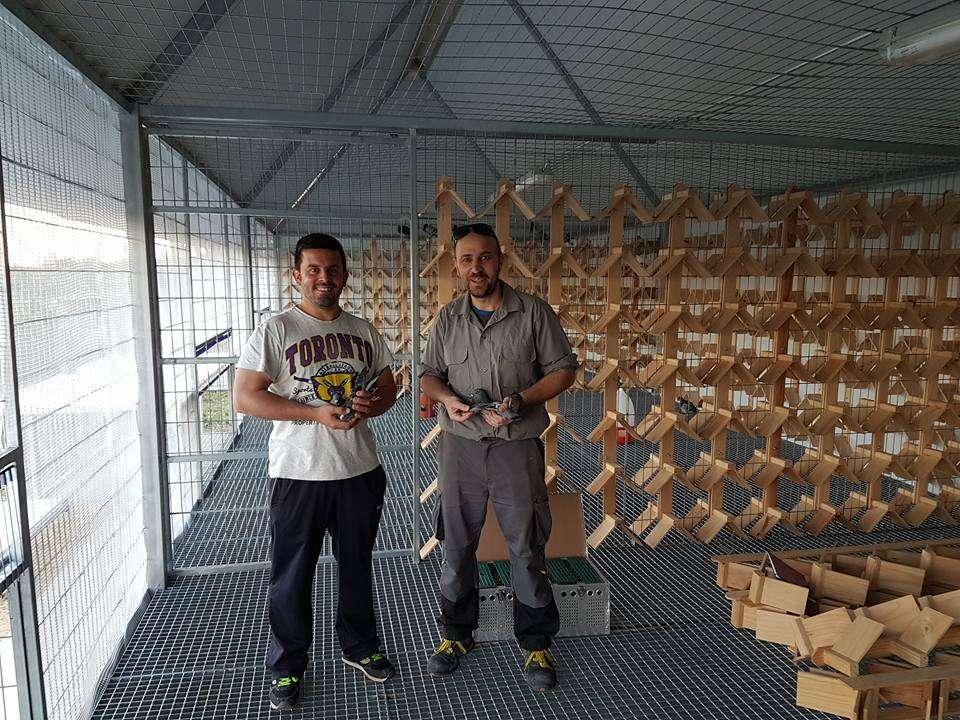 sevilla loft pigeon race-12