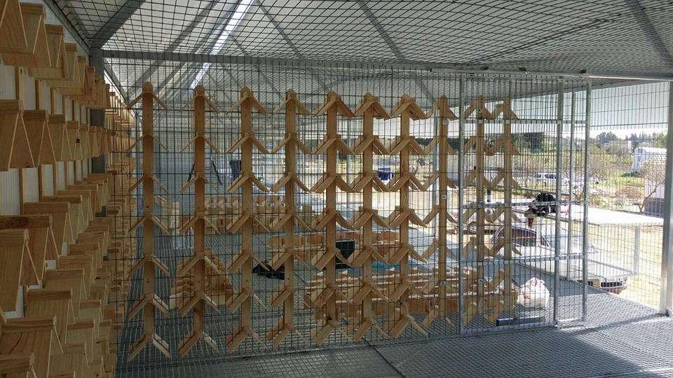 sevilla loft pigeon race-4
