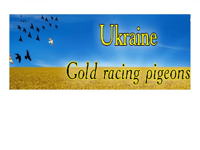 thimg_ukraine_800x600