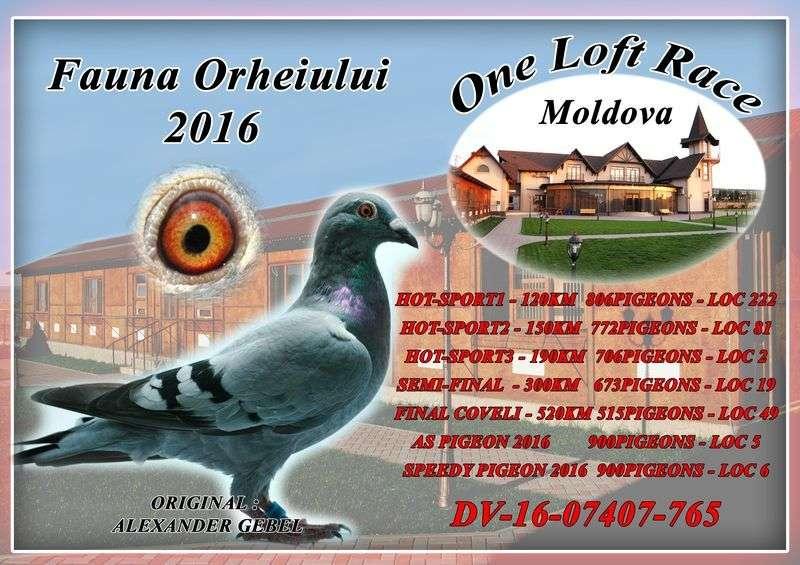 auction-moldova-50_1