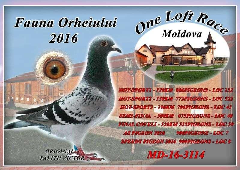 auction-moldova-60_1