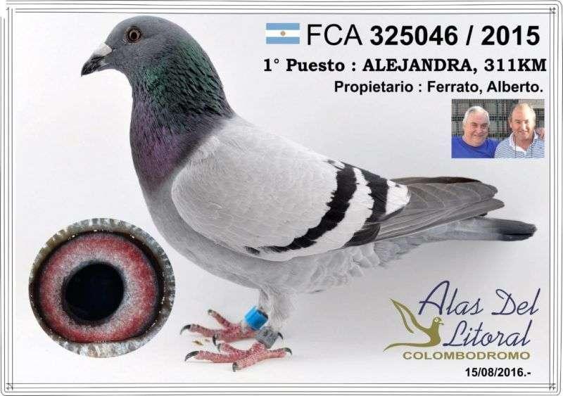 paloma-ganadora-ferrato-1024x720