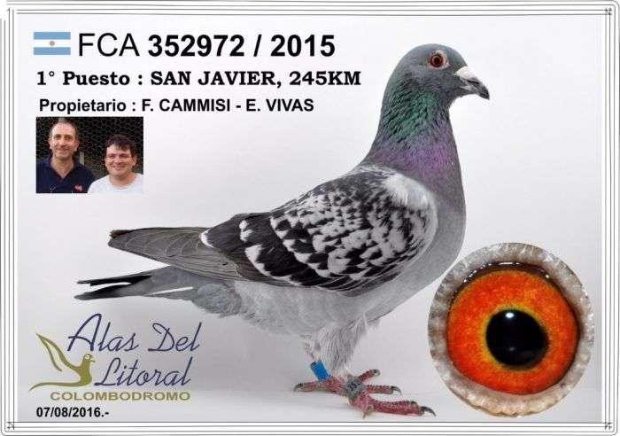 paloma-ganadora-san-javier-1024x720