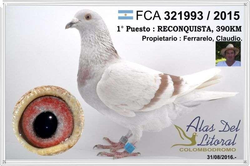 paloma-ganadora-ferrarelo-1024x681