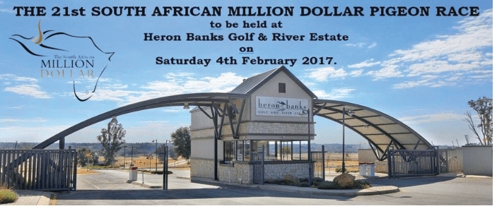 the-21st-south-african-million-dollar-pigeon-race